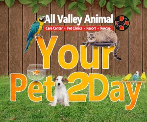 All Valley Animal Rescue